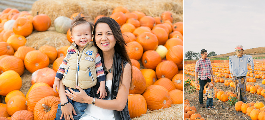 tanaka farms pumpkin patch 2014