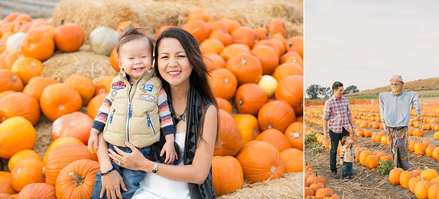 tanaka farms pumpkin patch 2014