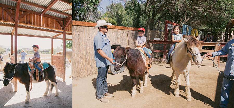 brandon's 1st birthday at zoomars san juan capistrano farmyard themed pony riding