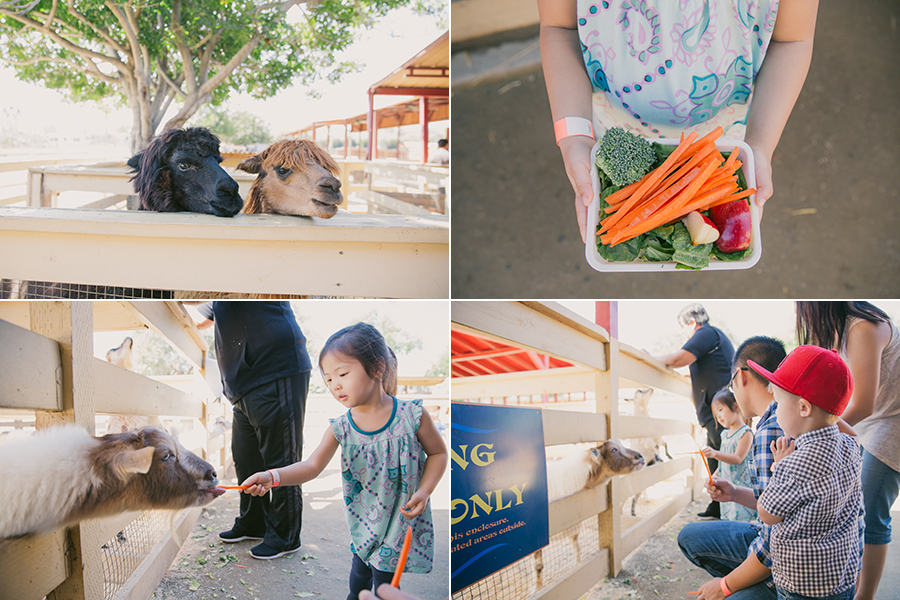 brandon's 1st birthday at zoomars san juan capistrano farmyard themed